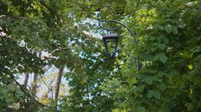 Street lamp among the trees in the park. Leaves in the sunbeam.  light in the absence of sunshine. street energy stock photography