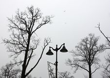 Street lamp and trunks with branches of winter bare trees against the sky with flying birds royalty free stock images