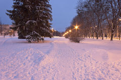 Street lamps in the city park in the blue hour in winter Royalty Free Stock Photos