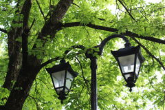 Street lamps. Hiden in leaves stock image