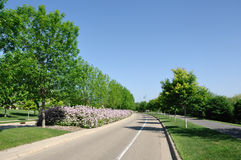 Street With Landscaped Median Stock Photos