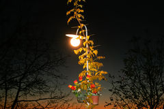 Street lantern through autumn branches Royalty Free Stock Photography