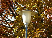 Street lantern at autumn colored leafs Stock Image