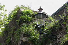 A street lantern on a medieval covered with plants wall in Maastricht, The Netherlands Royalty Free Stock Images
