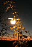 Street lantern at night Royalty Free Stock Photo