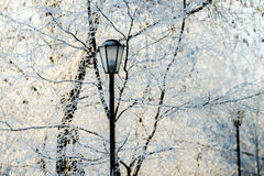 Street lantern in winter snowy city park Stock Image