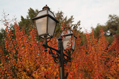 Street Lap. Park view fall season and street lamp Stock Images