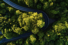 Street between large trees from top with drone aerial view, landscape. Green Stock Images
