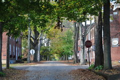 Street of Leaves Stock Photo