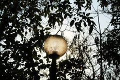Street light . Royalty Free Stock Photo