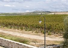An street light with grapevines in the background at the  Tomaresca Tenuta Bocca di Lupo. Pictured is a street light with fields of grapevines in the background Royalty Free Stock Photography