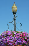 Street light with hanging petunia flower baskets Stock Photography
