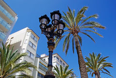 Street light and palms. Royalty Free Stock Image