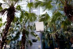 Street light with plants and modern building Royalty Free Stock Image