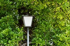 Street light pole surrounded by a tree with leaves stock images