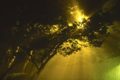 Street light radiating on a foggy night Stock Image