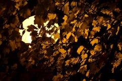 Autumn night light royalty free stock photo