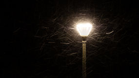 Street light in snow storm at night Stock Image