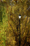 Street light in the trees Royalty Free Stock Image