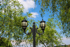 Street Lighting Pole and Willow Trees Royalty Free Stock Photography