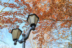 Street lights against the blue sky and autumn foliage Stock Images