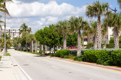 Street lined with palm trees Stock Photography