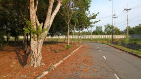 Street lined with tall autumn trees. Thailand Stock Images
