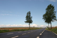 Street lines. Street in a landscape with trees Stock Photo