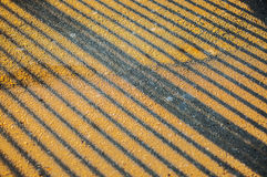 Street lines and shadows Royalty Free Stock Photography