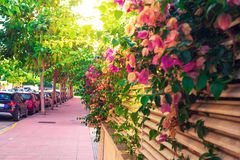 Street in Lloret de mar, Costa Brava, Spain. Flowers on fence in spanish town stock photo