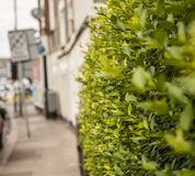 A street in London, the hedge. stock image