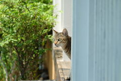 Street lonely cat Stock Photography