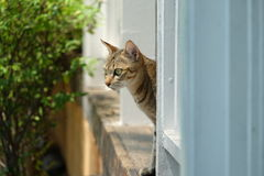 Street lonely cat Royalty Free Stock Photo
