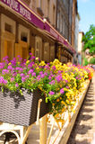 Street in Lvov decorated with flowers in flowerbeds Royalty Free Stock Images