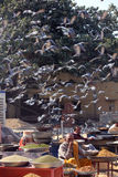 Daily street market in Jaipur through pigeons. JAIPUR, INDIA: Daily street market in Jaipur, with people selling cereal and many birds around them flying or royalty free stock photo
