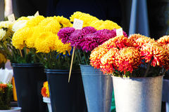 Street market selling flowers. Street market stand selling beautiful colorful flowers Royalty Free Stock Photo