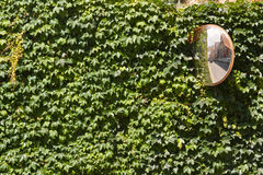Street Mirror on the Wall Covered in Ivy Stock Photography