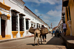 Street in Mompos, Colombia. A donkey in a street of Mompos in Colombia. Since the city is not easy to reach, it has preserved ancient traditions and ways of life royalty free stock images