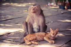 Street monkey sitting with a cat. Royalty Free Stock Images