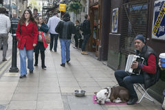 Street musician playing the accordion, with the dog Royalty Free Stock Image