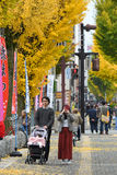 Street near Himeji castle, Japan. Himeji, Japan - November 20, 2016: A family are walking and taking picture along rows of yellow ginkgo trees near Himeji castle Stock Image