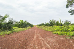 Street at oil palm plantation. Street through oil palm plantation landscape with blue skies Royalty Free Stock Image