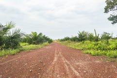 Street at oil palm plantation Royalty Free Stock Image