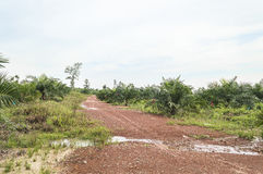 Street at oil palm plantation Royalty Free Stock Images