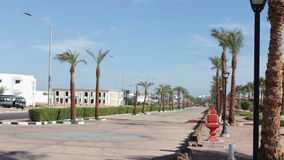 Street with palm trees in Egypt stock footage