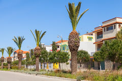 Street with palms along the roadside in Tangier Stock Image