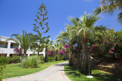 Street with palms in the beautiful living area Royalty Free Stock Photo