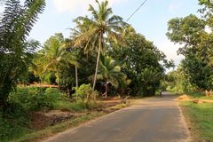 Street with Palms in Sri Lanka royalty free stock photo