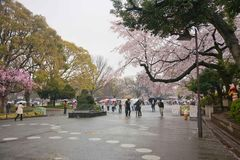 The street the park before Ueno zoo Royalty Free Stock Photo