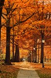 Street, Pathway, Leaf, Fall, Autumn Stock Images